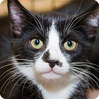 Adopt A Pet :: Amy - Irvine, CA