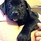 Adopt A Pet :: Babe Ariel Adoption pending