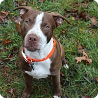 Adopt A Pet :: Charlie-ADOPTION PENDING - Tyrone, PA
