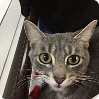 Adopt A Pet :: Sheila - Medina, OH