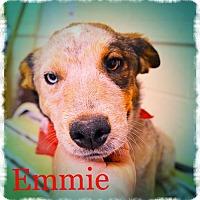 Adopt A Pet :: EMMIE - Blue eye! - Chandler, AZ