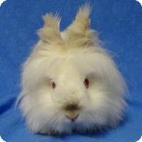 Adopt A Pet :: Gia - Woburn, MA