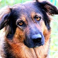Adopt A Pet :: ROXIE(GORGEOUS--SO SMART!! WOW - Wakefield, RI
