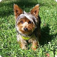 Adopt A Pet :: Sam - Grand Rapids, MI