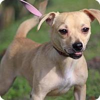 Adopt A Pet :: Peanut/MS - Columbia, TN