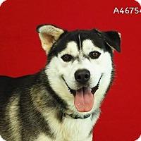 Adopt A Pet :: Toby - Seattle, WA