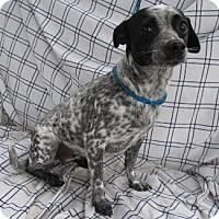 Adopt A Pet :: JUNE - Pt. Richmond, CA