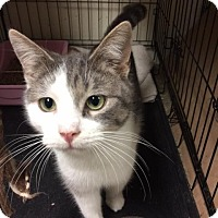 Adopt A Pet :: Eggnog - Windsor, CT