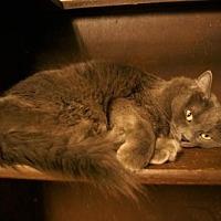 Adopt A Pet :: Foxy - Tempe, AZ