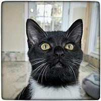 Adopt A Pet :: Jordan (CL) - Alpharetta, GA