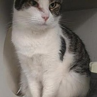 Adopt A Pet :: Jared` - Ashtabula, OH
