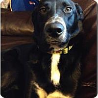 Adopt A Pet :: Stuckey - Oak Brook, IL