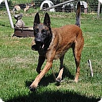 Adopt A Pet :: Moriah - Hamilton, MT