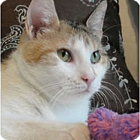 Adopt A Pet :: Jenny Any Dots - Chicago, IL