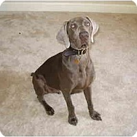 Adopt A Pet :: **ADOPTED**  Suede - Eustis, FL