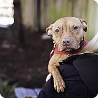Adopt A Pet :: Tutu - Reisterstown, MD