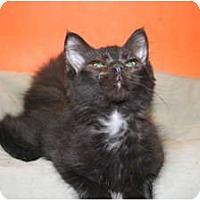 Adopt A Pet :: RANDOLPH - SILVER SPRING, MD