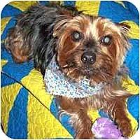 Adopt A Pet :: Ernie - Bunnell, FL