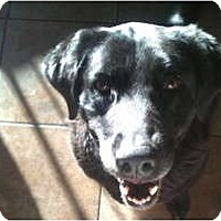 Adopt A Pet :: Bailey - Pending - kennebunkport, ME