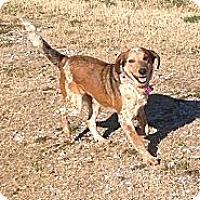Adopt A Pet :: Sara - Russellville, KY
