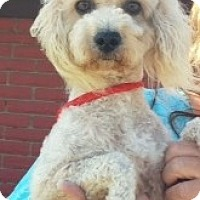 Adopt A Pet :: Buddy #3 - Orange, CA