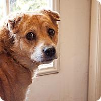 Adopt A Pet :: Tasha - Tanner, AL