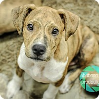 Adopt A Pet :: Oomph - Gainesville, FL