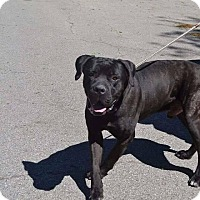 Adopt A Pet :: Rico-OH - Virginia Beach, VA