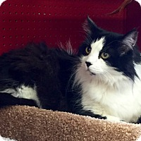 Adopt A Pet :: Peaches - San Ramon, CA