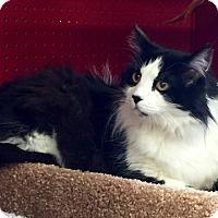 Adopt A Pet :: Peaches - San Ramon, CA