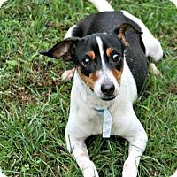 Adopt A Pet :: Gracie - Lufkin, TX