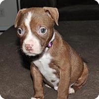 Adopt A Pet :: Gracie - Crocker, MO