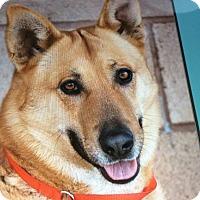 Adopt A Pet :: HAL VON HOLMES - Los Angeles, CA