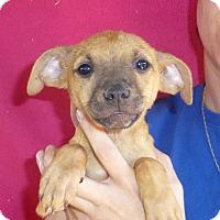 Adopt A Pet :: Pixie - Oviedo, FL