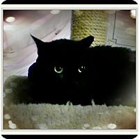 Adopt A Pet :: Raj - Trevose, PA