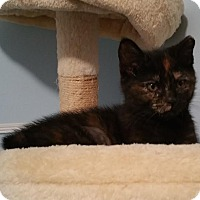 Adopt A Pet :: Mia (foster care) - Philadelphia, PA