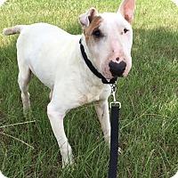 Adopt A Pet :: Mr Magoo - Houston, TX
