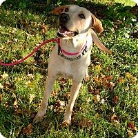 Adopt A Pet :: Rita - New Oxford, PA