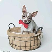 Adopt A Pet :: John - Kenner, LA