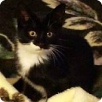 Adopt A Pet :: Trixie - McHenry, IL