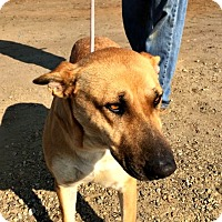 Shepherd (Unknown Type) Mix Dog for adoption in Sunnyvale, California - Fiona