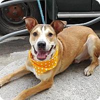 Adopt A Pet :: Timmy - BONITA, CA