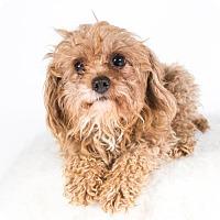 Adopt A Pet :: Finley - St. Louis Park, MN