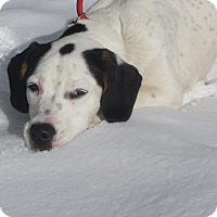 Adopt A Pet :: Maggie - Ridgway, CO