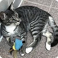 Adopt A Pet :: Stanley - Tampa, FL