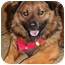 Photo 4 - Keeshond Mix Dog for adoption in Racine, Wisconsin - Bismark