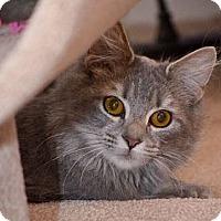 Adopt A Pet :: Luna - Reston, VA