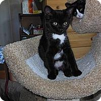 Adopt A Pet :: Tia & Talia - CARVER, MA