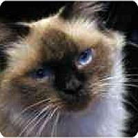 Adopt A Pet :: Felicity - Davis, CA