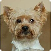 Adopt A Pet :: Georgie - Charlotte, NC